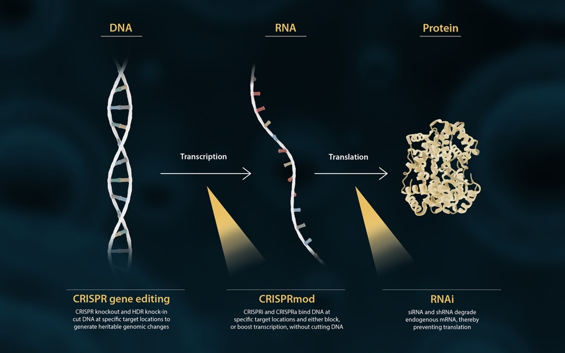 The central dogma of biology: DNA to RNA to Protein