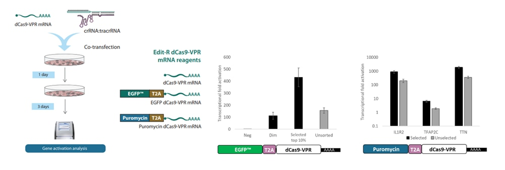 CRISPRa with dCas9-VPR mRNA