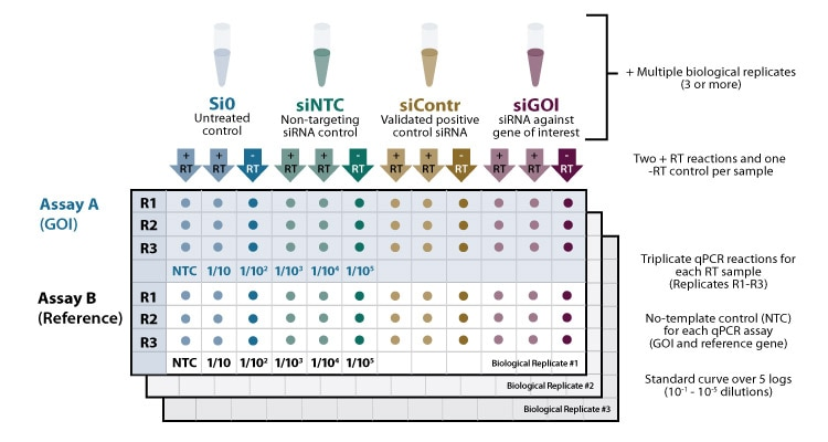 biological replicate qpcr layout