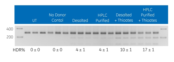 Gene editing utilizing HDR at the EMX1 locus with multiple DNA donor oligo options
