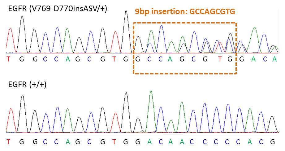 Chromatograph showing heterozygosity for the EGFR V769-D770insASV mutation within EGFR